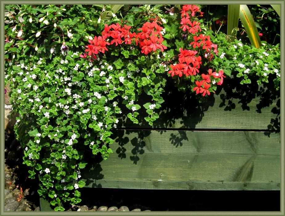 photoblog image Picton Castle Gardens #4