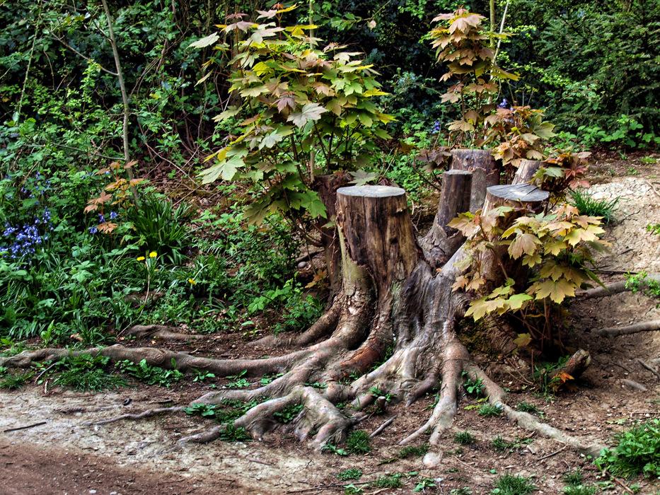 photoblog image Attenborough Nature Reserve #4/5