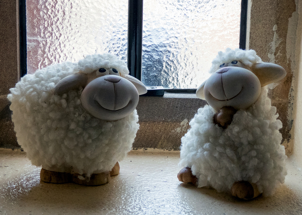 photoblog image Sheep Saturday 2/4